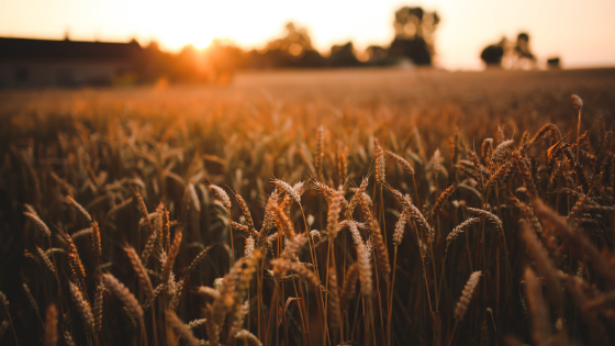 1 MINUTE MATTERS: THE LAW OF THE HARVEST